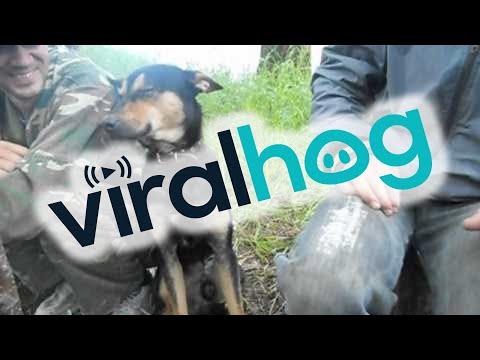Watch Dog Falling Asleep on the Job || ViralHog