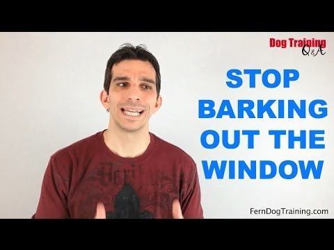 How to Stop Dogs Barking Out the Window