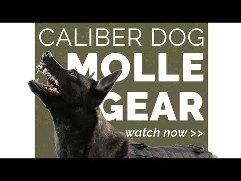 Caliber Dog MOLLE Gear