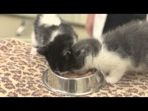 Correct Amounts of Food for Adult Cats & Kittens : General Cat Health