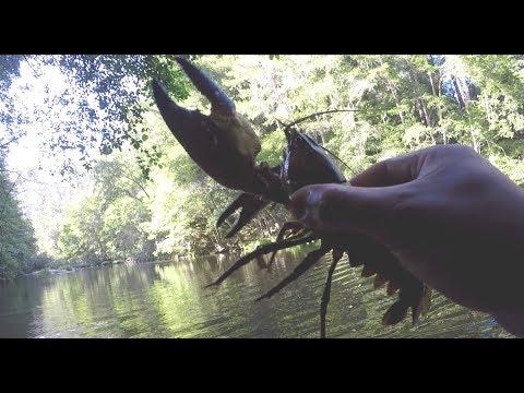 Crawfish Catch and Cook: Louisiana Crawfish Boil