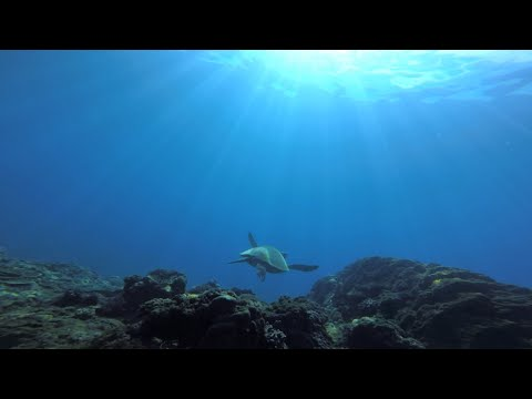 Genius In The Blue (Island Travel of Little Okinawa) 2015