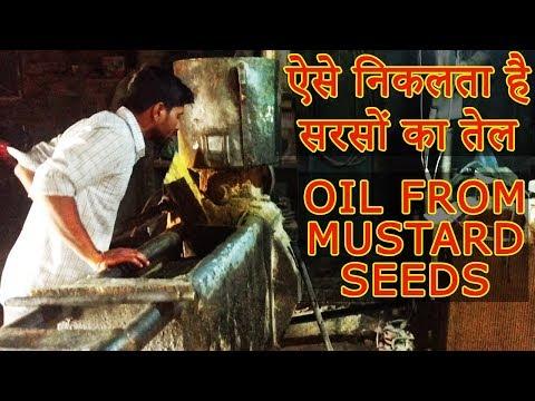 ऐसे निकलता है शुद्ध सरसों का तेल Organic Mustard oil extracted from Mustard Seeds देसी विधि