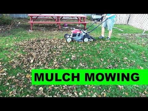 Mulch Mowing Leaves with the Honda HRX217 Self Propelled Lawn Mower