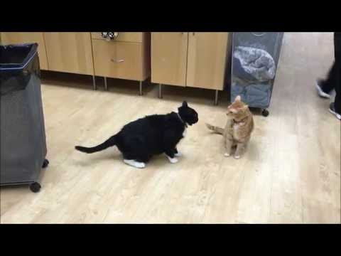 An example of normal feline play behavior