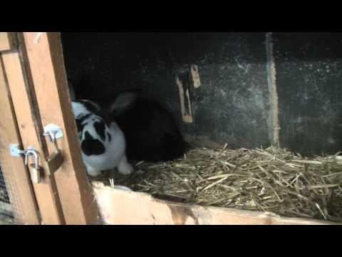 Kaninchen im Dezember
