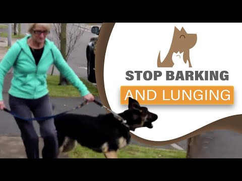 Barking at the door/dogs and lunging; aggression -The Dog Guardian