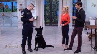 Meet Jett the Police Dog! - Pickler & Ben