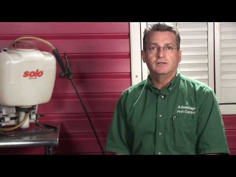 Pest Control : How to Get Rid of Bees