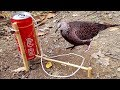 Amazing Quick Bird Trap From Cans Coca Cola