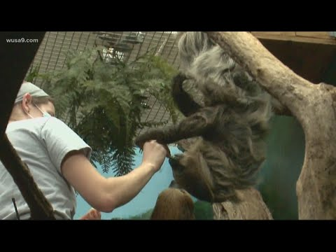 Xxx Mp4 Animal Sex At The Zoo How Keepers Make Breeding Matches 3gp Sex