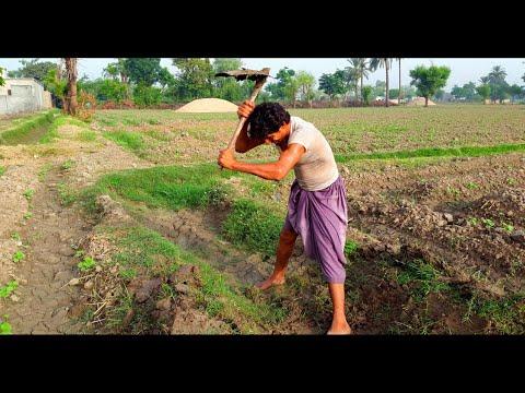 Pakistani Farmers Working In Fields | Punjab Village Life