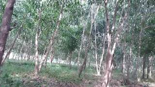 Santale Video