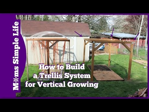 How to Build Trellis System for Vertical Growing
