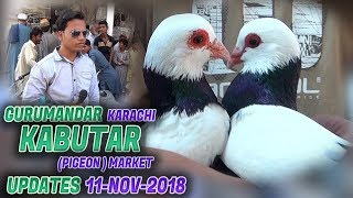 Guru Mandir Kabooter Market 11-11-2018 Latest Updates (Jamshed Asmi Informative Channel) Urdu/Hindi