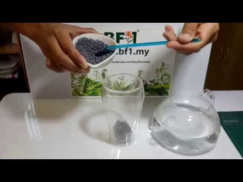 Lavender Flower Tea - Herbal Tea Malaysia [BF1]