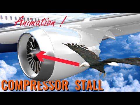 What makes BIRD STRIKES so dangerous ?