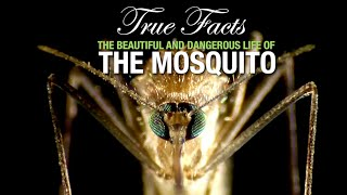 True Facts: The Mosquito