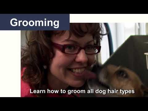 Dog Advice Videos - Channel Trailer