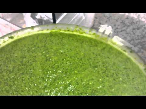 Arugula pesto made fresh on the farm