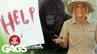 Funniest Gorilla and Mouse Pranks - Best Of Just For Laughs Gags