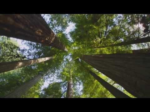 Zona Ganjah - Naturaleza (Video NO Oficial) - HD - By ARIMC69