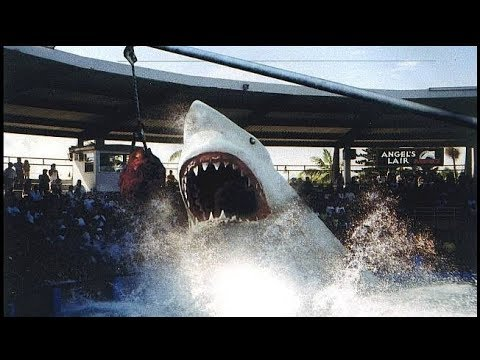 Seventy-two foot Megalodon Shark called Angel || The Trench
