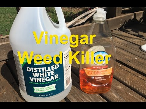 Vinegar and Dish Soap Weed Killer