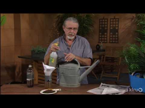 House plant compost tea and watering trick | John Droomgoole | Central Texas Gardener