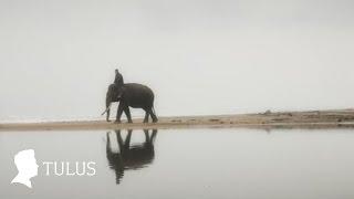 TULUS - Gajah (Official Music Video)