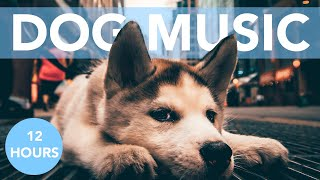 DOG SLEEP MUSIC! Relaxing Melodies to Help Your Dogs Sleep!