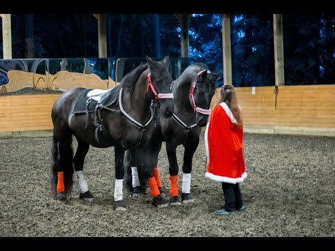 Friesian Liberty and Roman Riding Performance