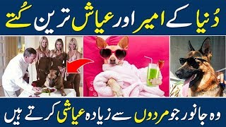 Richest Pets In The World | Richest Animals VS Richest People | Urdu | Hindi | Success People