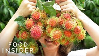 Download 13 Extraordinary Fruits Around The World Video