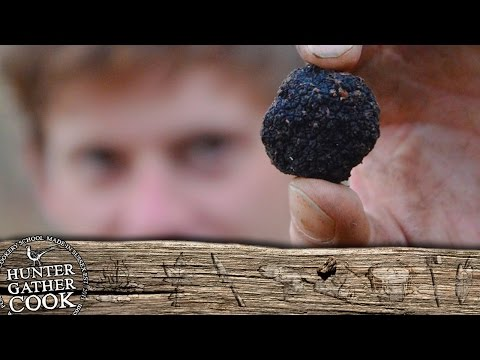 Truffle Hunting in Sussex.