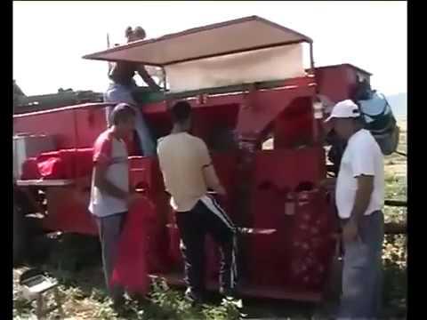 Onion Harvesting Machine प्याज की खुदाई और छंटाई वाली मशीन Onion ki khudayi aur chatayi wali machine