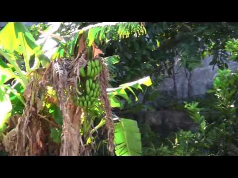 Forest Bathing video   Rain Forest Wotton Waven, Dominica