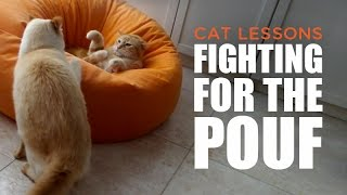 Epic Cat Fight To Win The Pouf