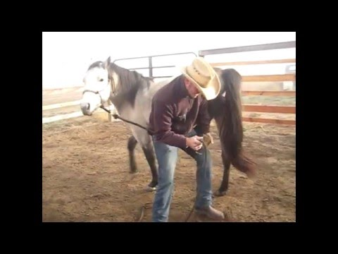 Picking up the feet of a horse that doesn't like feet being handled
