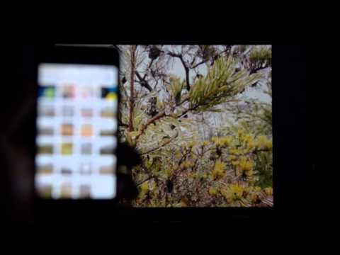 How to View iPhone Photos on the Chromecast for Free
