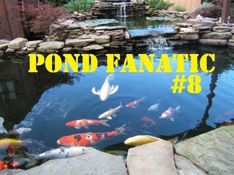 PF#8: Floating Algae HELP!