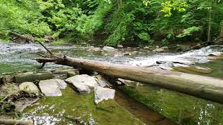 Samsung Galaxy S9 Plus Camera (Video): Gorgeous Nature Footage