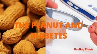 the peanuts and diabetes - prevents and low glucose levels https://www.youtube.com/channel/UCn1YQr8CcpCiWVJmX1ZAFUg Groundnut (peanut) is a good food for diabetes. You can reduce your risk of developing diabetes, it helps you control your blood sugar and even reduce the risk of other cardiovascular problems that often accompany this disease. It is a low-glycemic food, rich in protein, fiber and healthy fats. As with any food, peanuts should be consumed in moderation, as they are highly caloric. -help to take care of your heart -help to not dehydrate by high potassium containing peanuts -help to avoid cramps and muscle aches -help to reduce the risk of infections, especially skin -It prevents damage to nerves and therefore pain in face, legs or arms For 16 years he was monitored and tracked peanut consumption, the incidence of diabetes. At the end of the study, the researchers concluded that consumption of peanuts can potentially reduce the risk of developing diabetes. Visit the following video:  https://youtu.be/I3fL9KYgU7w Share this video: https://youtu.be/ZJKnb2dVYsk Subscribe to my Channel (Subscribe) https://www.youtube.com/channel/UCn1YQr8CcpCiWVJmX1ZAFUg Other videos Recommended: Ep. 1: What Is Diabetes? TheDiabetesDownload Wilford Brimley: Diabetes Commercial (Parody) childpredatormissile Breaking Down Diabetes feat. Michael Stevens- The Diabetes Download TheDiabetesDownload Littlest pet shop: The Diabetes dilemma (Part 1) LPSparkleGirl REMEMBER THE DIABETES! (Gmod Prop Hunt) Mr Sark Diabetes Intervention - Studio C Studio C Is Peanut Butter Bad for You? Dr. Josh Axe Is Peanut Butter Bad For You? Mama Natural Stay fit in 2 mins: Know the health benefits of peanuts ABP NEWS Top 5 Benefits Of Peanuts | Best Health and Beauty Tips | Lifestyle | Health Food freez frame films Home Remedies for Diabetes | Control Your Blood Sugar Levels Naturally Dr. Vikram Chauhan Blood Sugars, Diabetes & Insulin: Dr. Berg