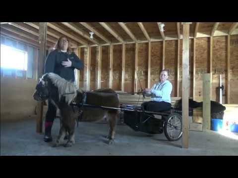 Miniature Horse Driving Basics