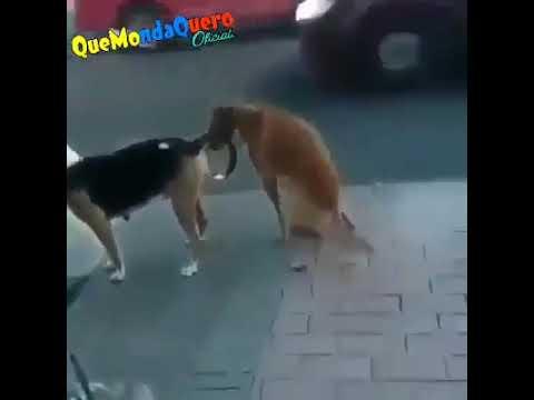 Xxx Mp4 Dog Sex Funny 3gp Sex