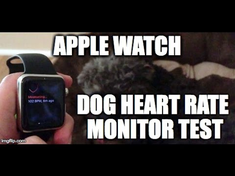  Apple Watch - Dog Heart Rate Monitor?