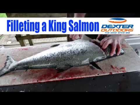 Filleting A King Salmon - Dexter Coated Knife