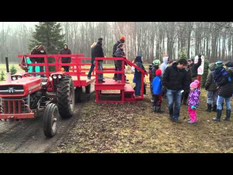 Tannenbaum Farms: Fraser Fir Christmas tree flies off farm