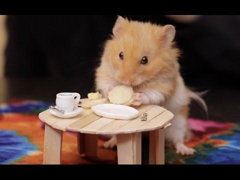 Hamster mobile sex man