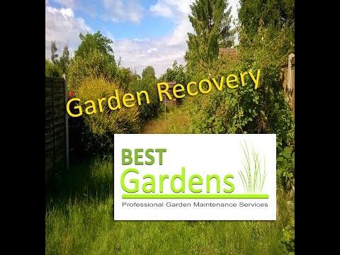 Garden Recovery & Tidy